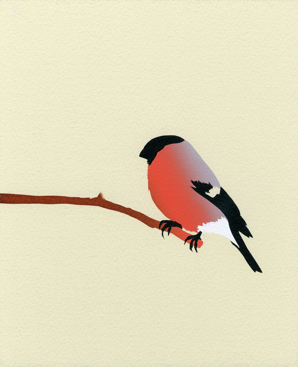 Image of Bullfinch Screen Print