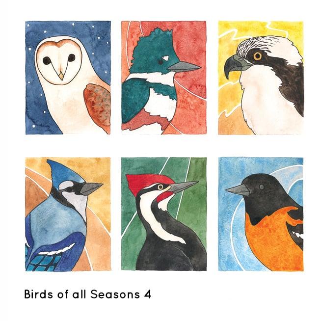 Image of Birds of All Seasons 4 Card Set