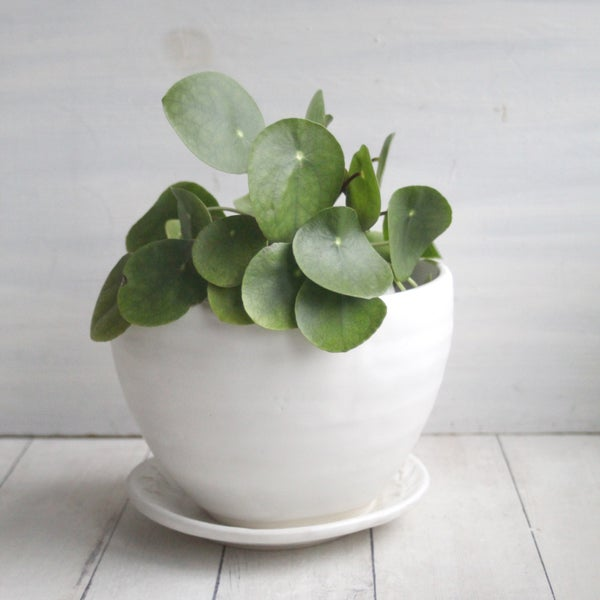 Image of arge Rustic Modern Flower Pot and Matching Drip Dish in Matte White Glaze, Made in USA