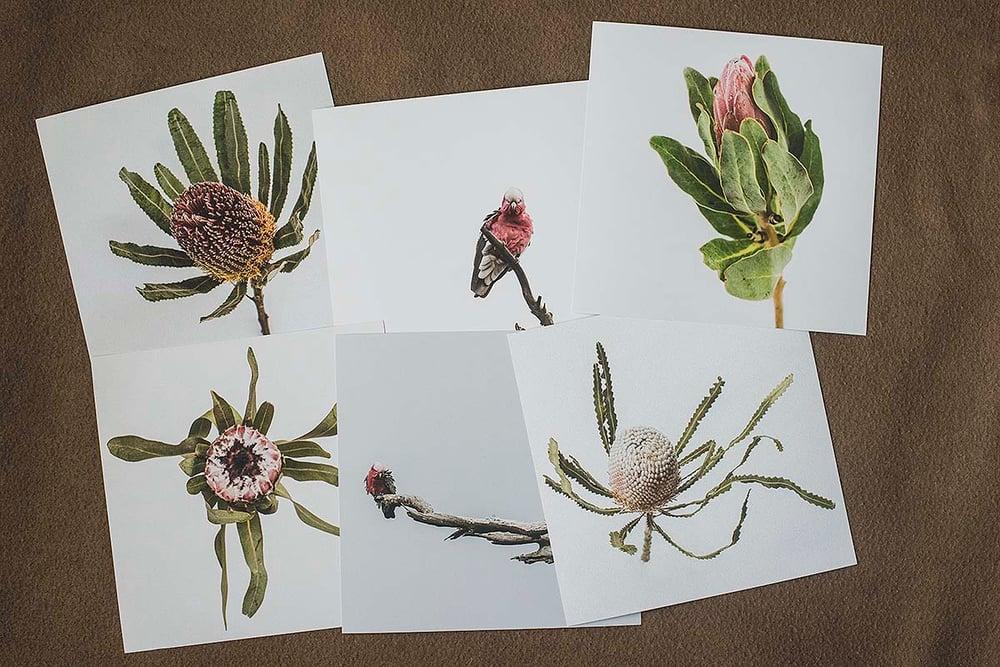Image of Australiana 1 - Postcard Collection