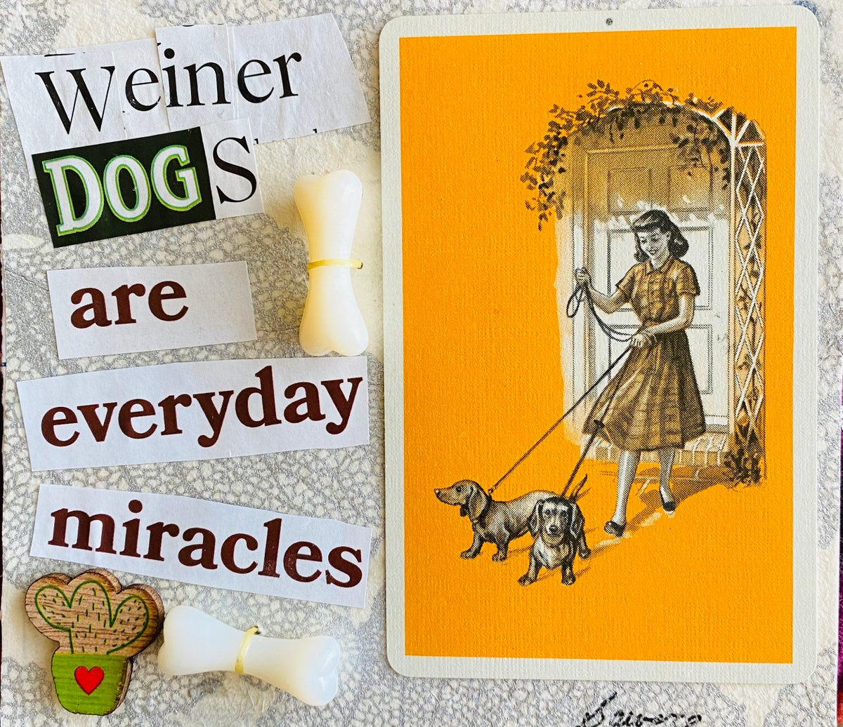 Weiner dogs are everyday miracles