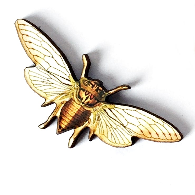 Image of Cicada Illustrated Wooden Brooch Pin