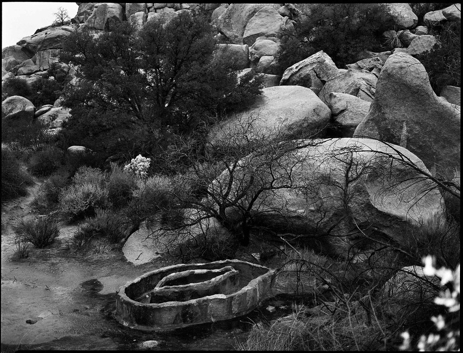 Double Ring Water Trough Near Barker Dam, Joshua Tree N.P.