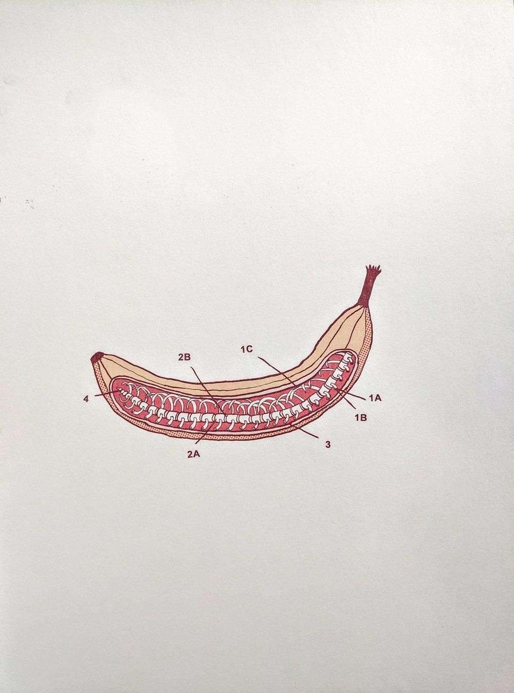Image of Banana Anatomy
