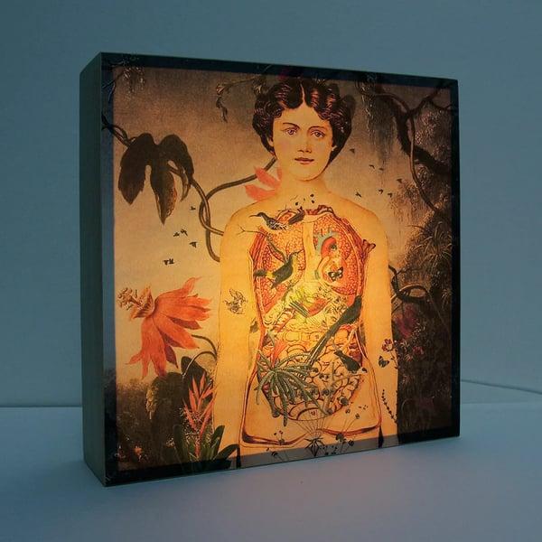 Image of Lámpara anatomía mujer