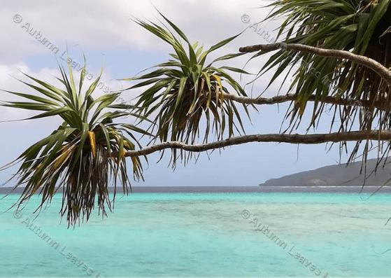 Image of T19 Mystery Island Vanuatu