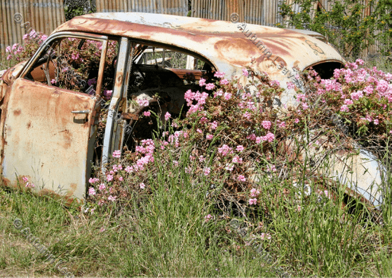 Image of T3 Old car new life Tasmania