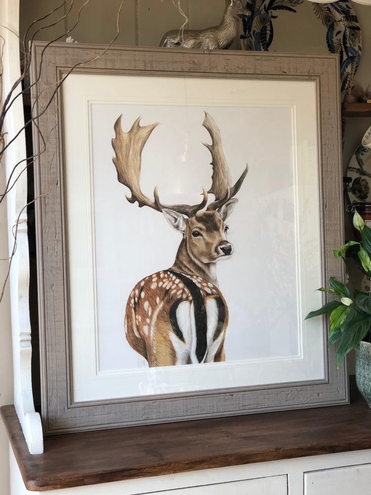 Image of 'Fallow Deer' Original Drawing