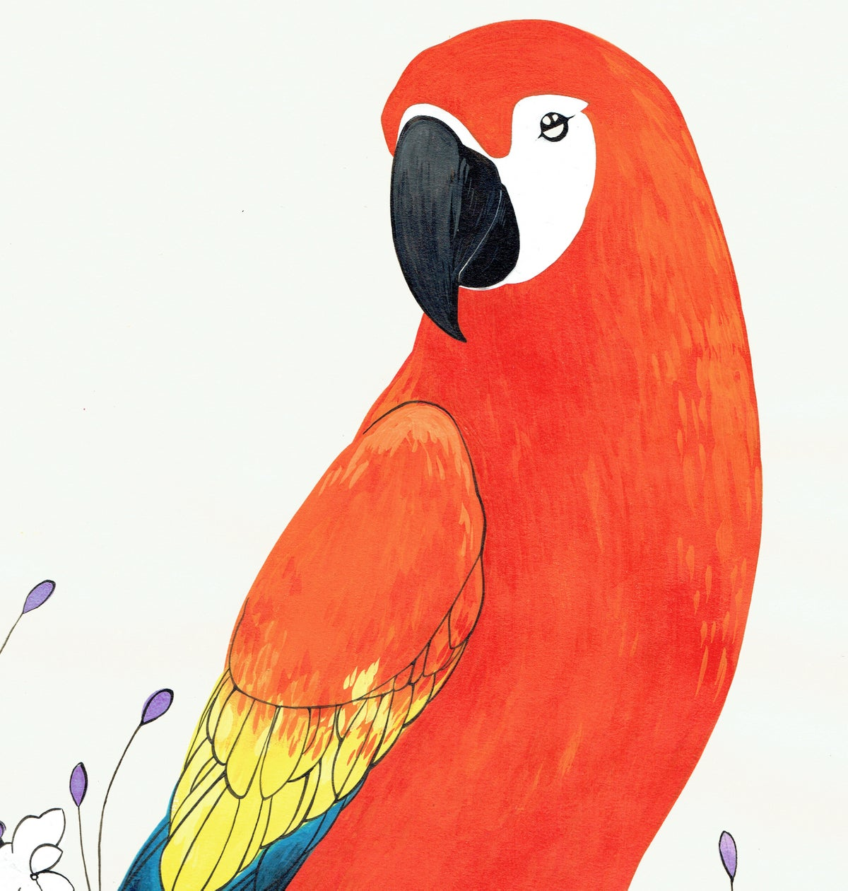 Image of Scarlet Macaw