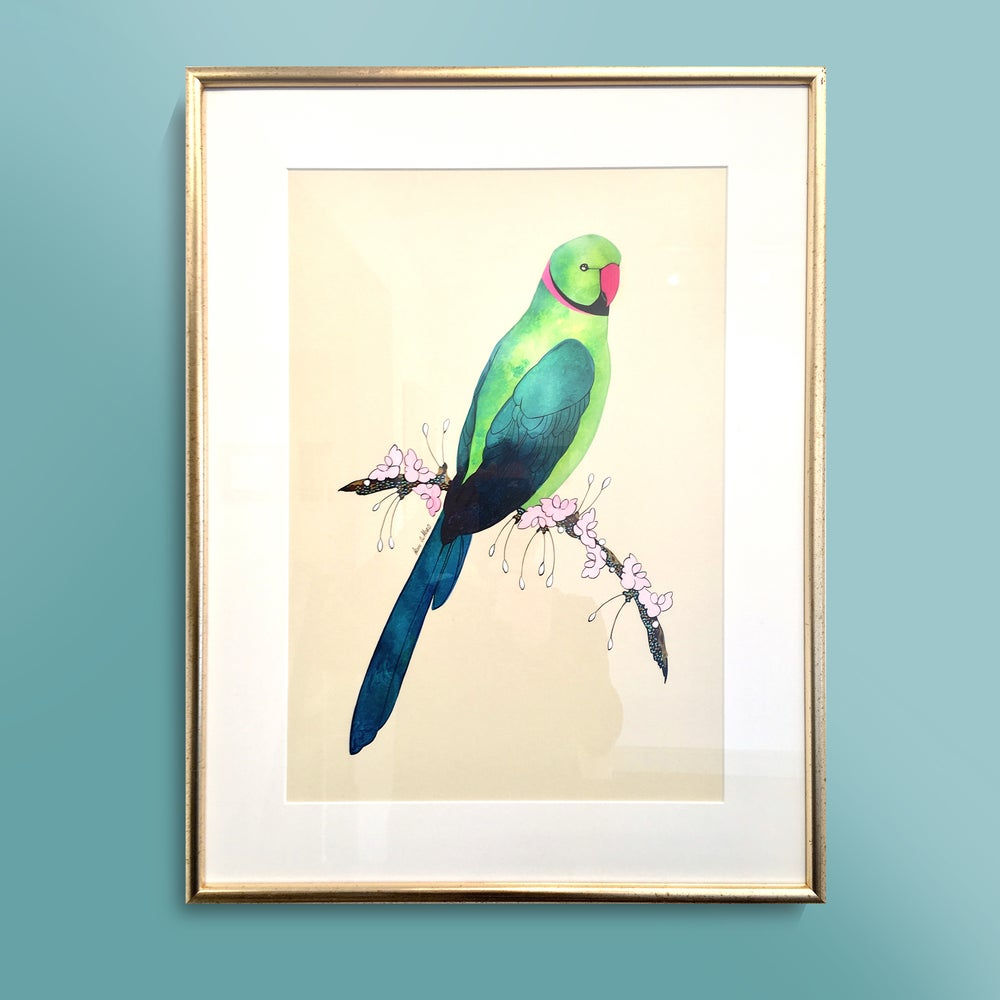 Image of Rose Ringed Parakeet - SOLD
