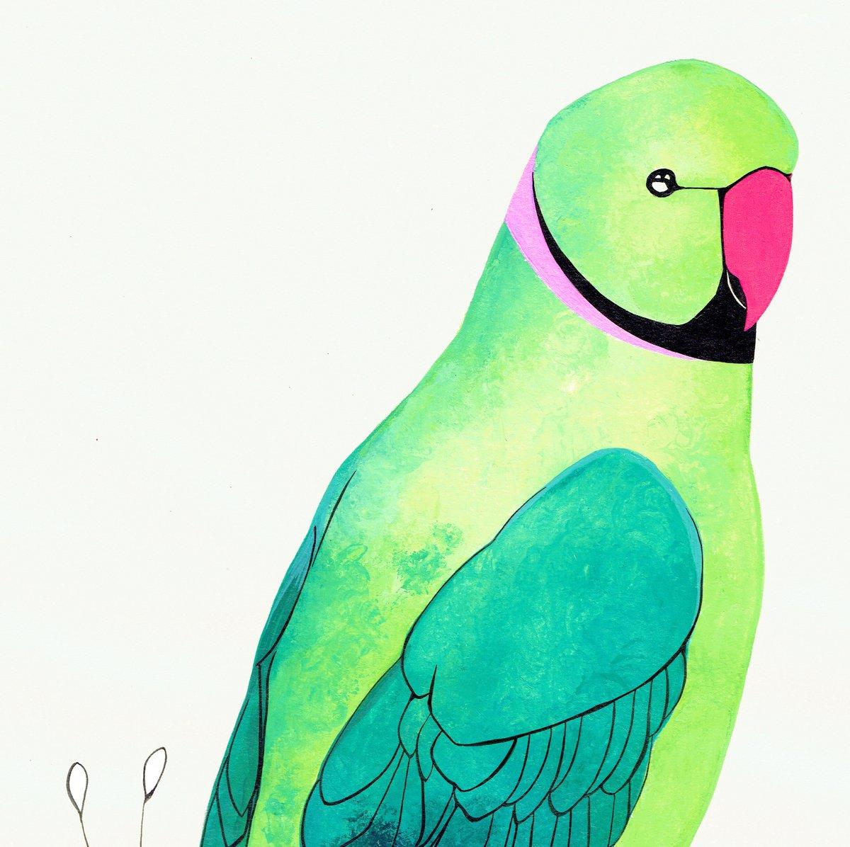 Image of Rose Ringed Parakeet - SOLD