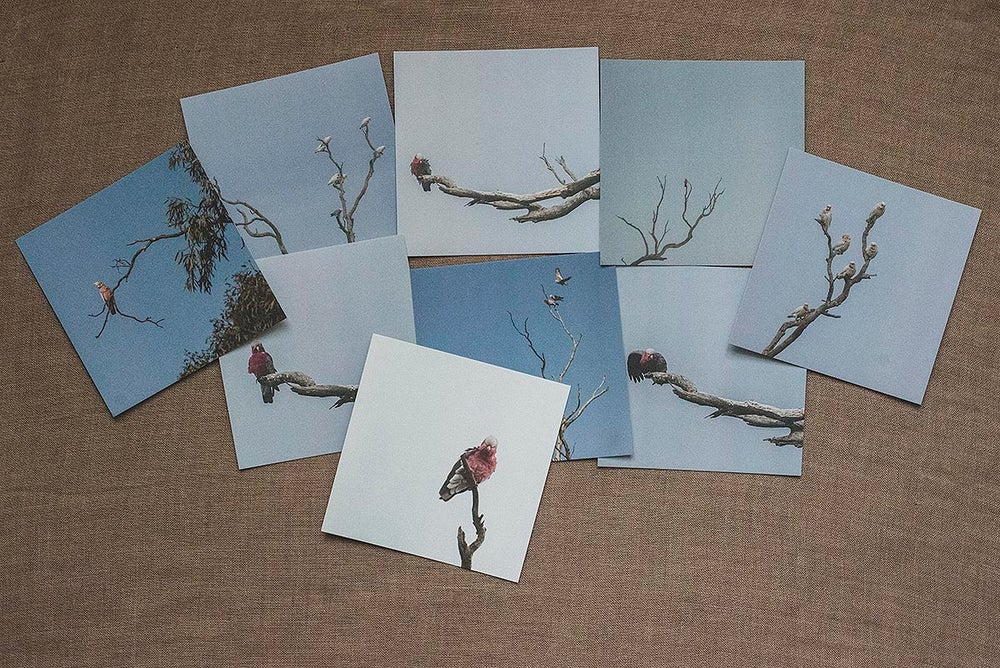 Image of Don't be a Galah - Postcard Collection