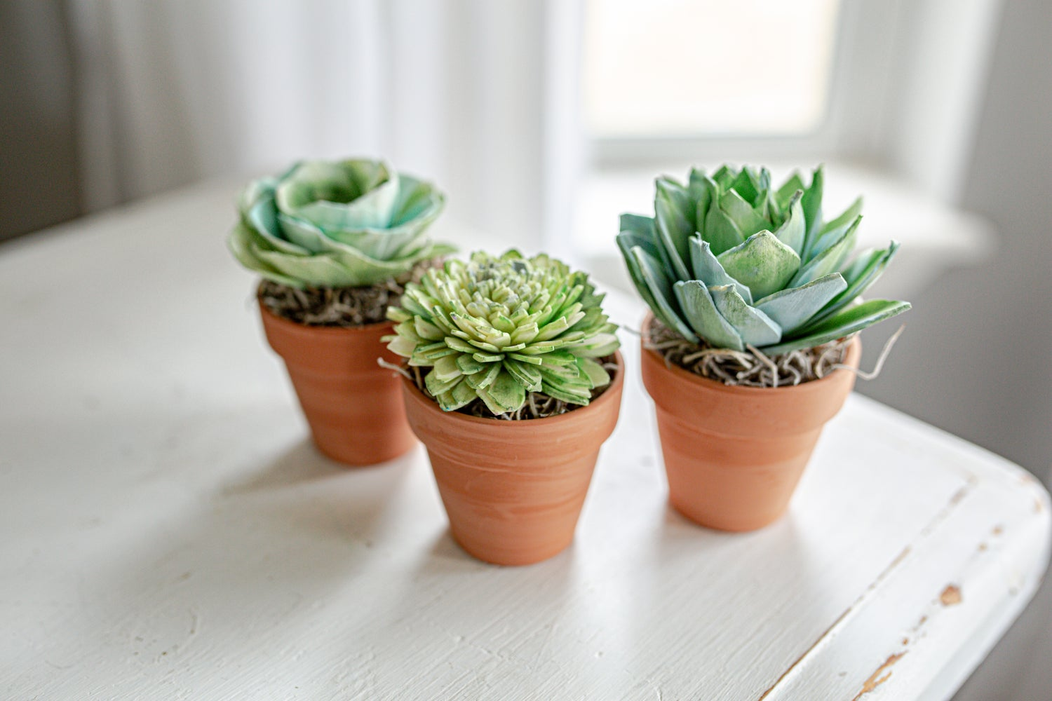 Image of Assorted Wood Succulents