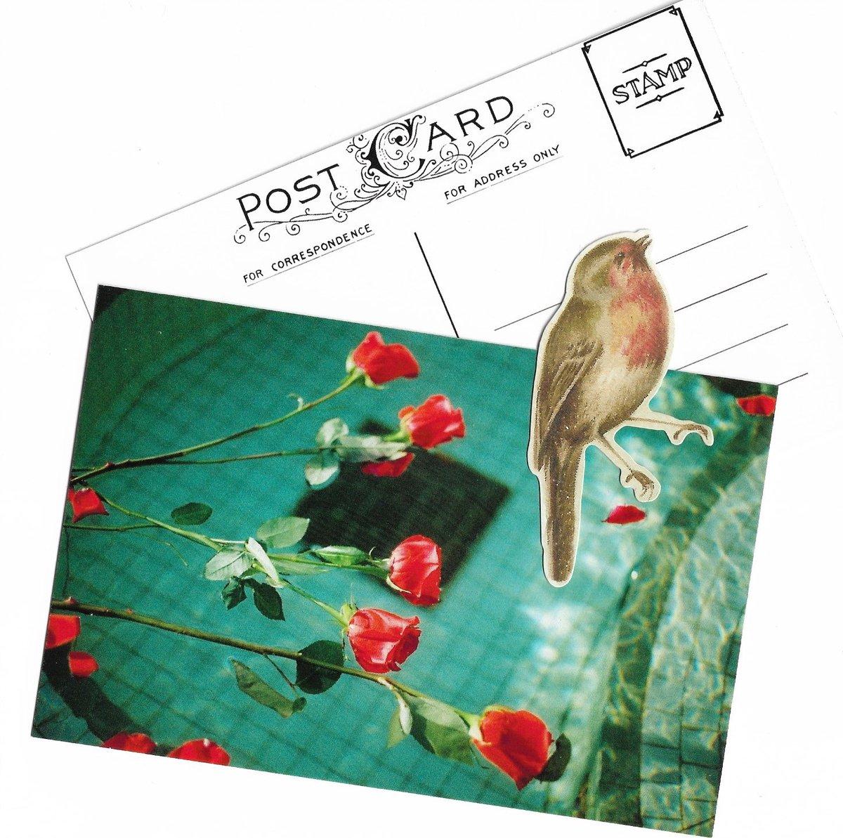 Rose Water Postcard