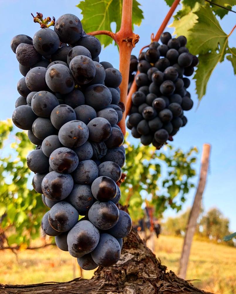 Image of CLANTE IGP Toscana [2009] 0.75l.