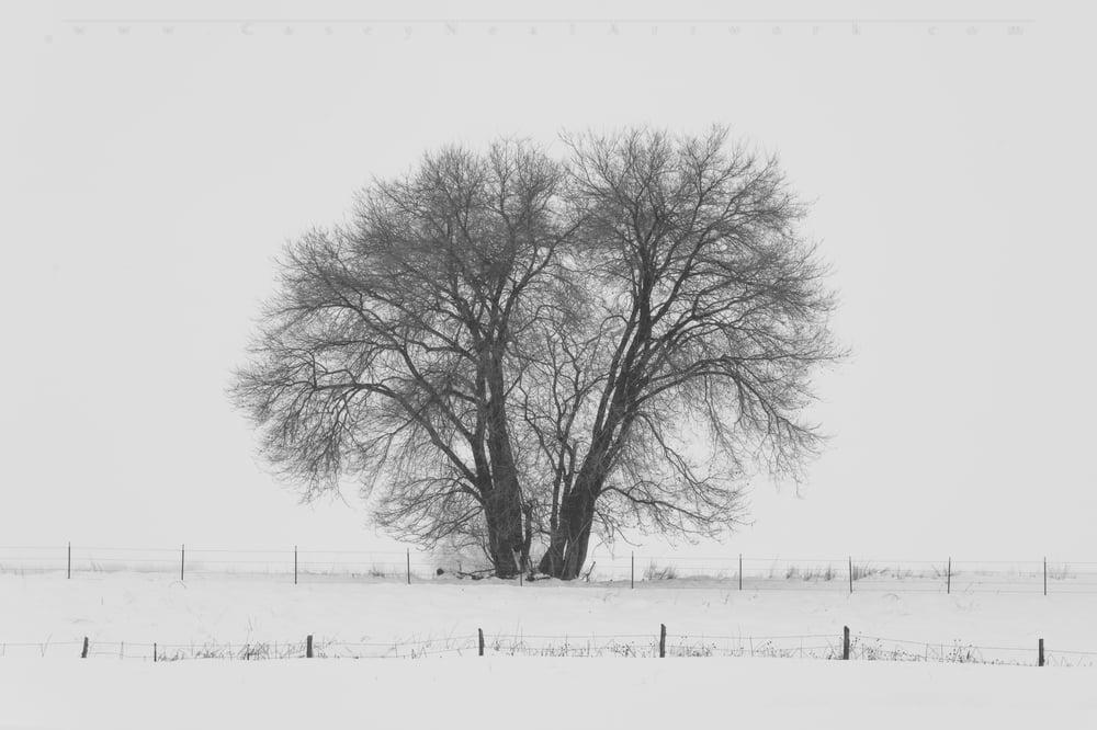 Image of Snow Tree