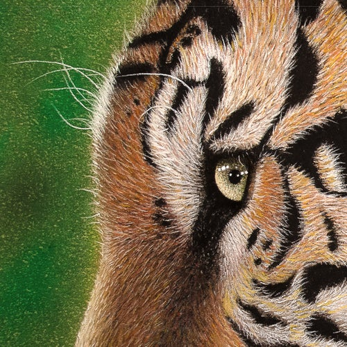 Image of Tiger - Original Artwork