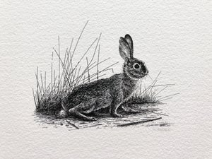 Cottontail—Signed Fine Art Print