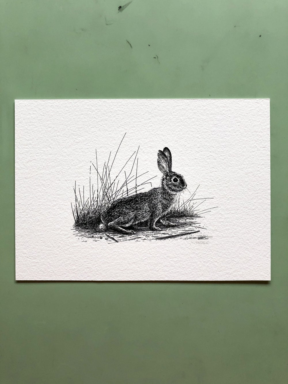 Image of Cottontail—Signed Fine Art Print