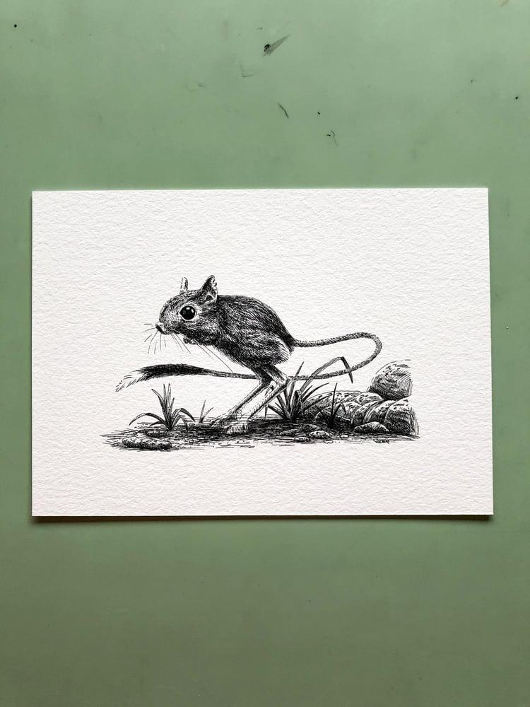 Image of Jerboa—Signed Fine Art Print