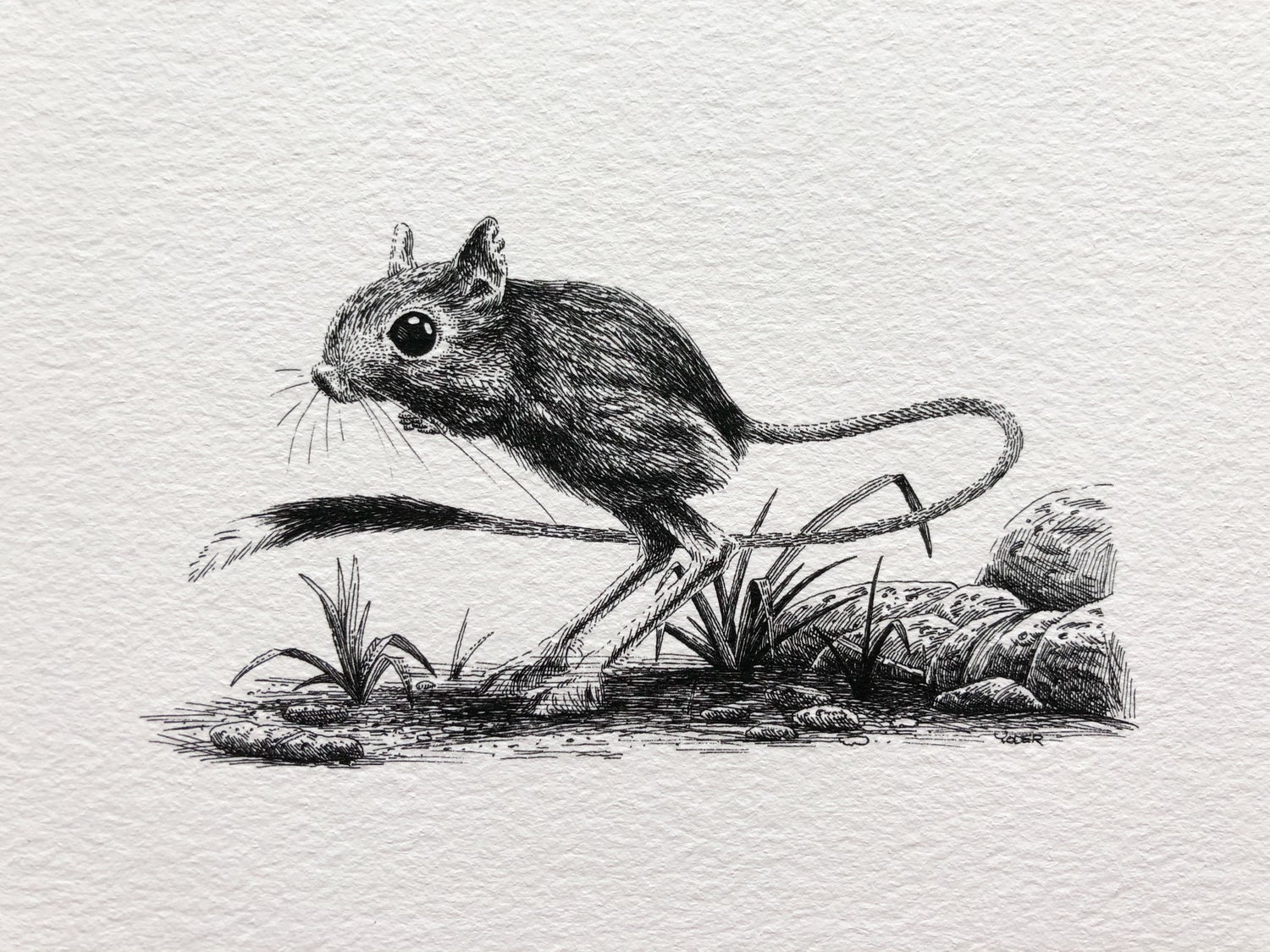 Image of Jerboa—Signed Fine Art Print