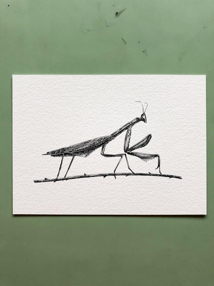 Image of Praying Mantis—Signed Fine Art Print