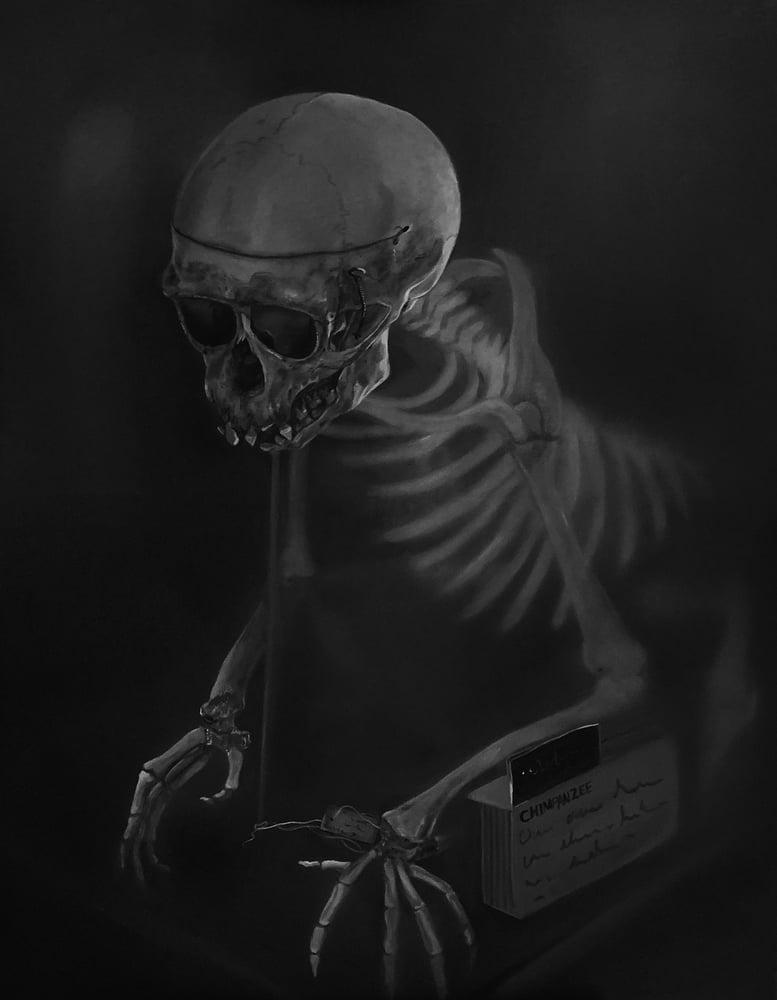 Image of Chimpanzee skeleton