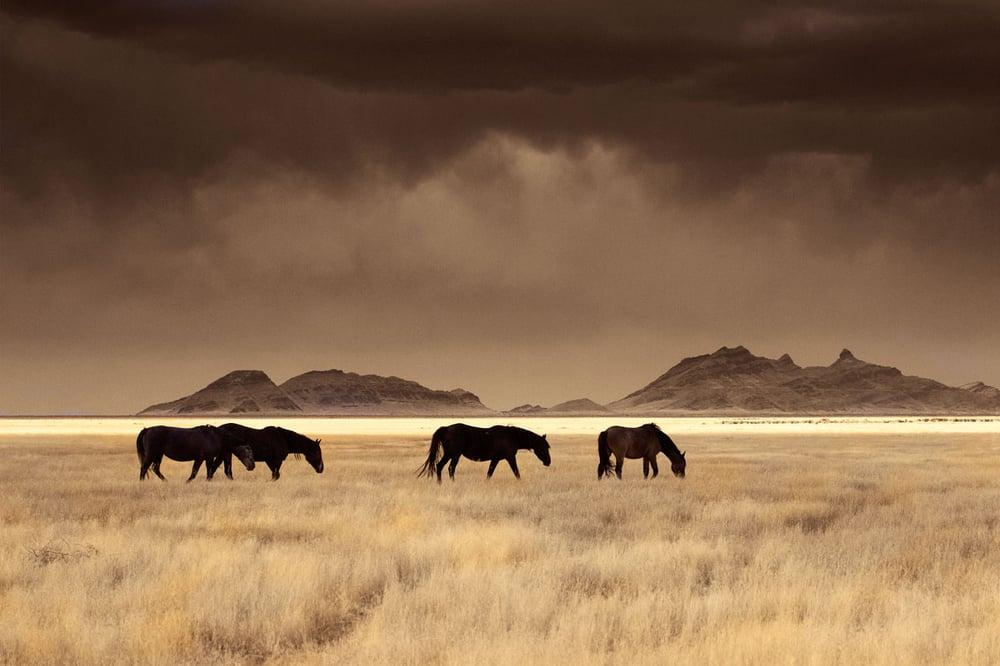 Image of High Desert Nomads