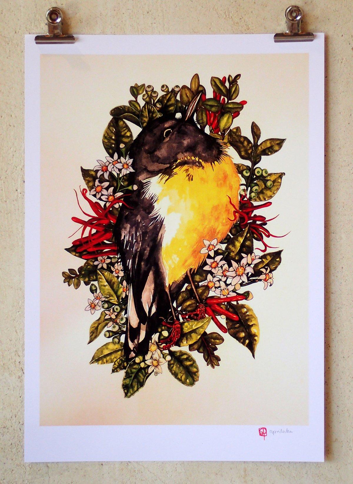 'Tomtit, Putaputaweta and Mistletoe' - A3 Print