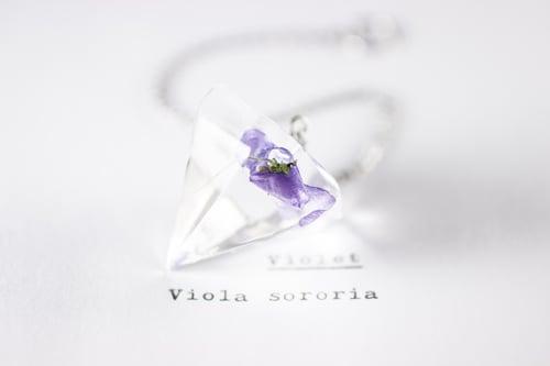 Image of Violet (Viola sororia) - Pendulum #1