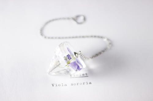 Image of Violet (Viola sororia) - Pendulum #2