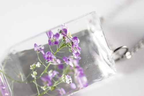 Image of Sweet Alyssum (Lobularia maritima) - Small #5