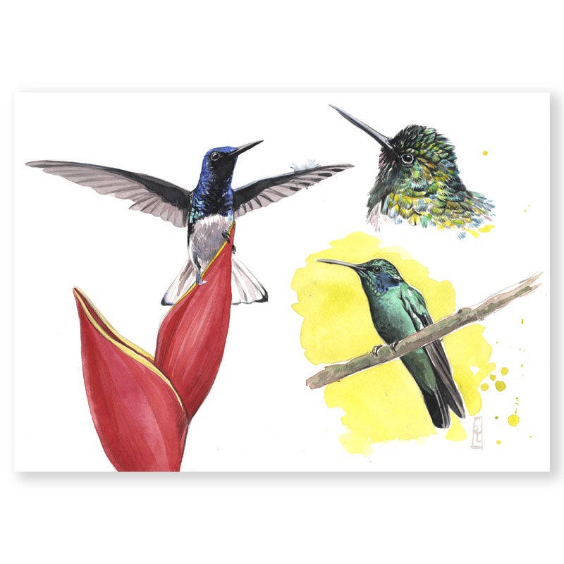 "Image of Original Painting - ""Colibris"" - 26x36 cm"
