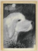 "Image of ""White Dog"" an illustrated memoir"
