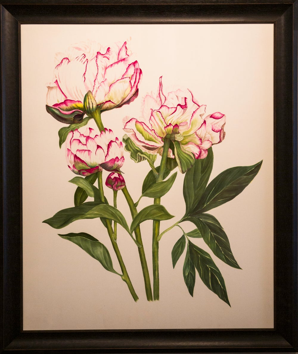 Image of Peonies