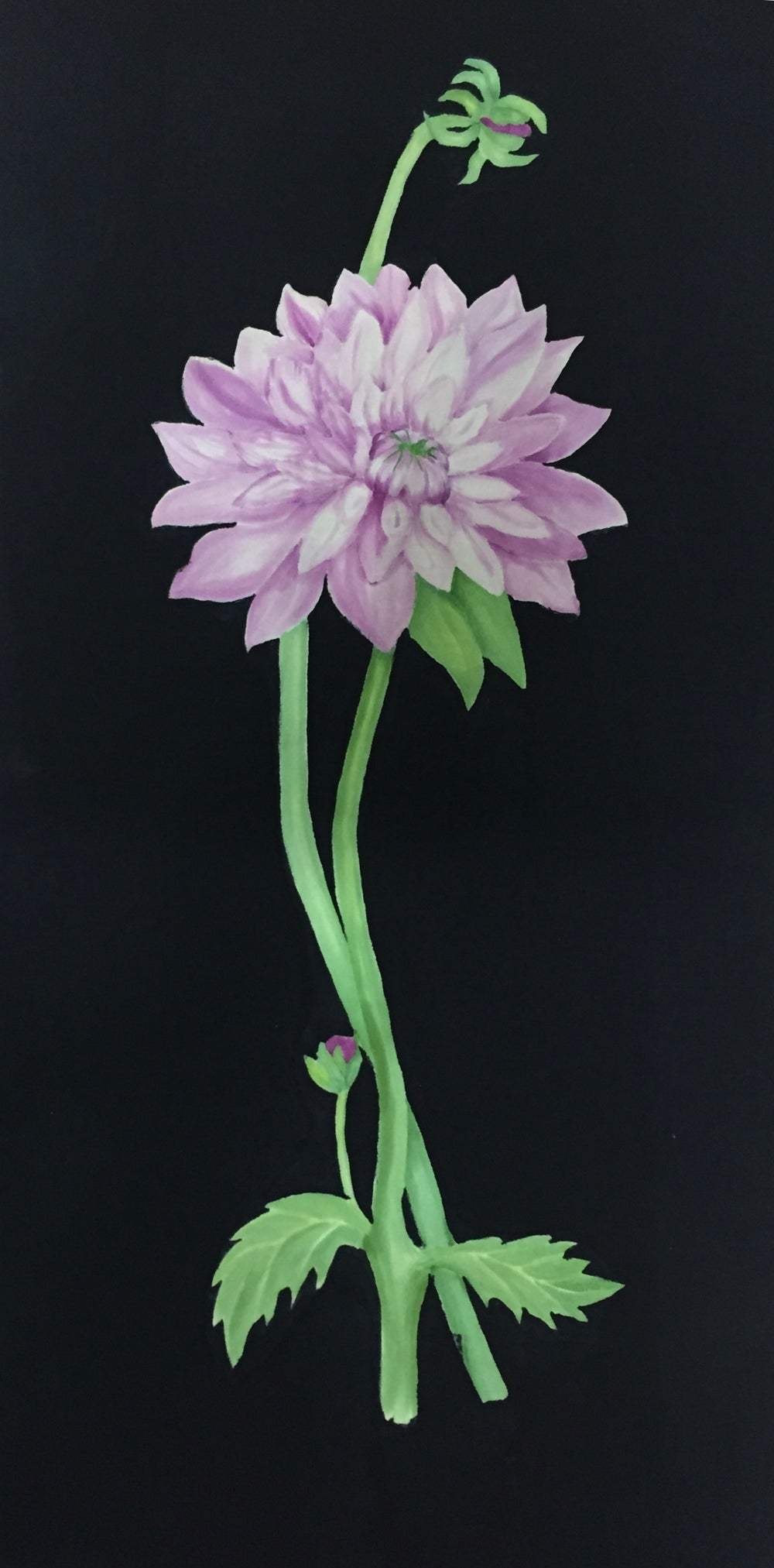 Image of Purple Mum
