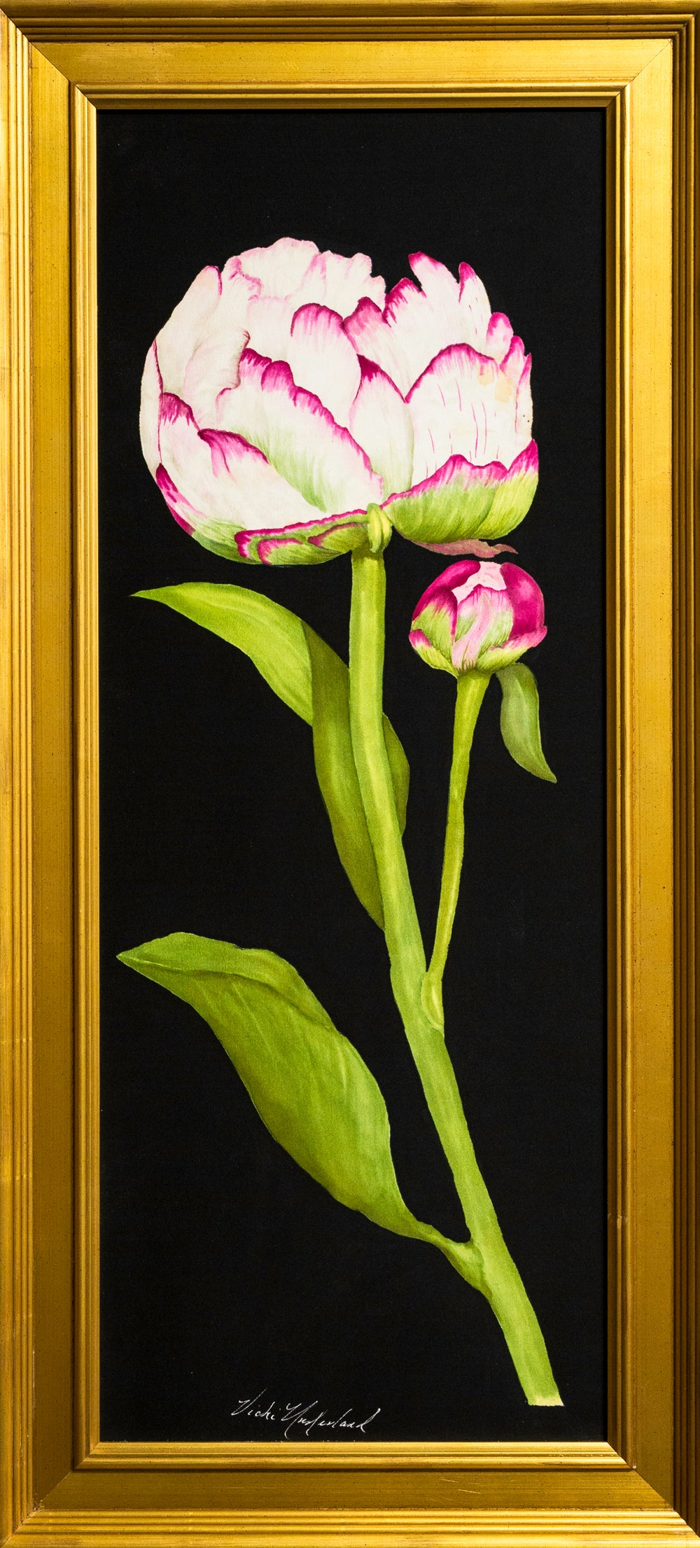 Image of Peony and bud on black background