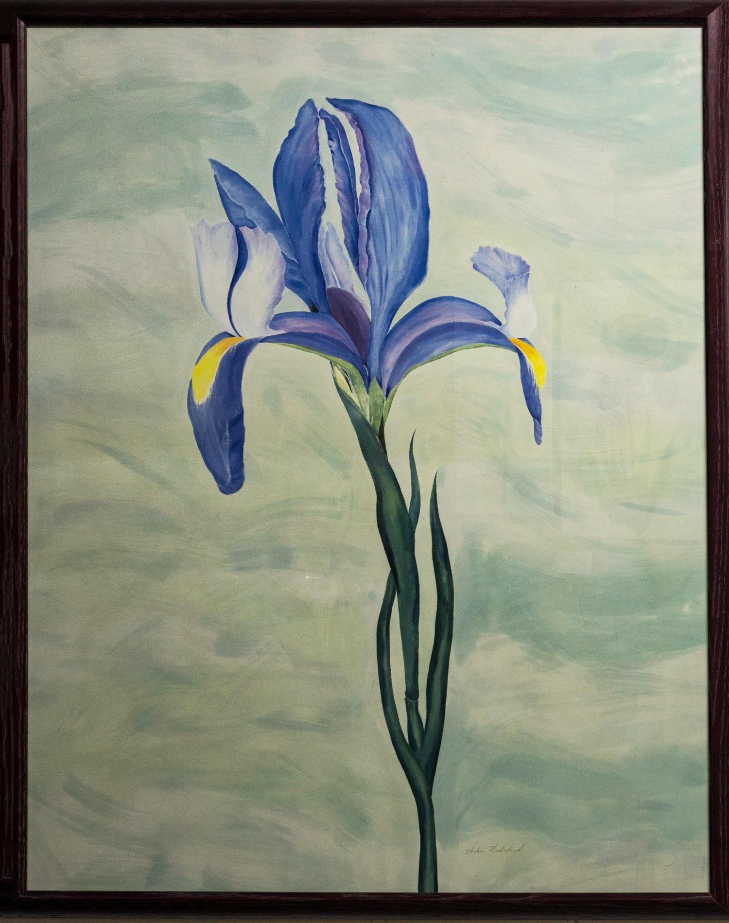 Image of Delicate  Iris