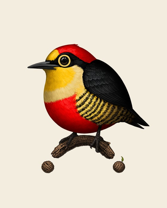 Image of Yellow-fronted Woodpecker