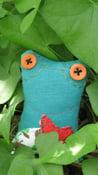 Image of Tiny froglet