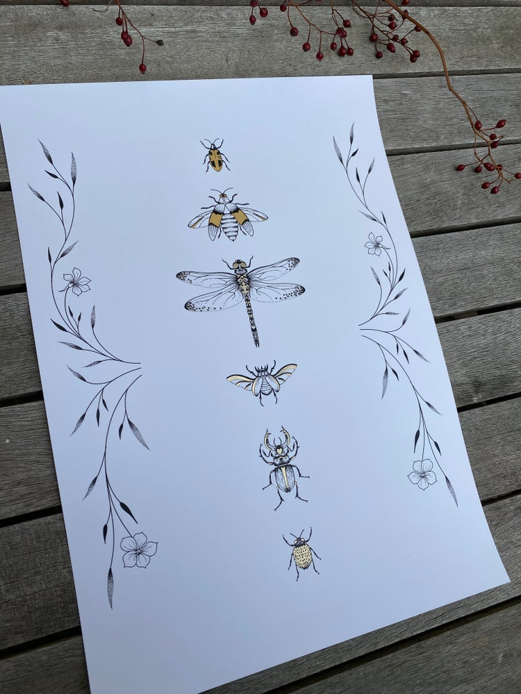 Image of A3 Insect Print