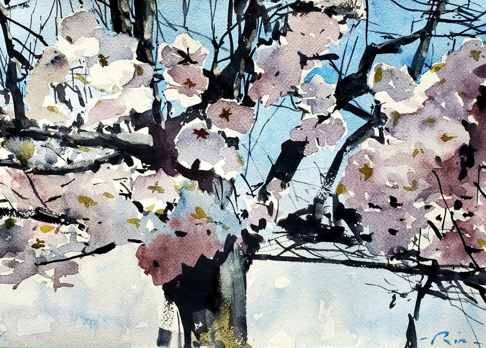 Image of ORIGINAL High Park Cherry Blossoms