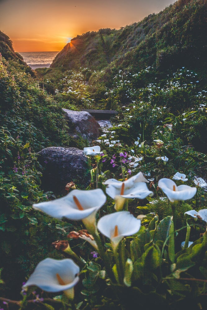 Image of Big Sur Lilly's
