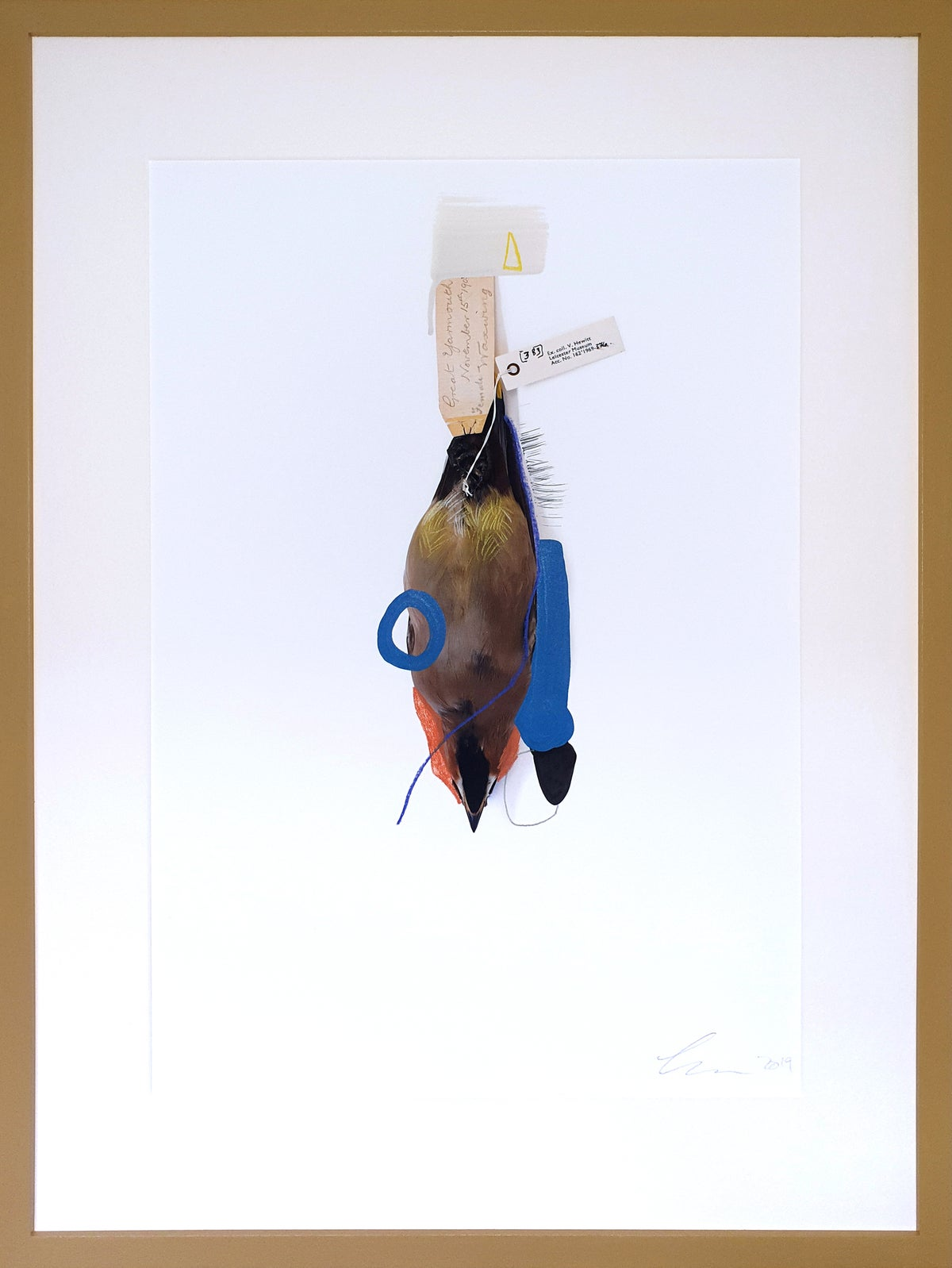 Waxwing (Blue Lobster)