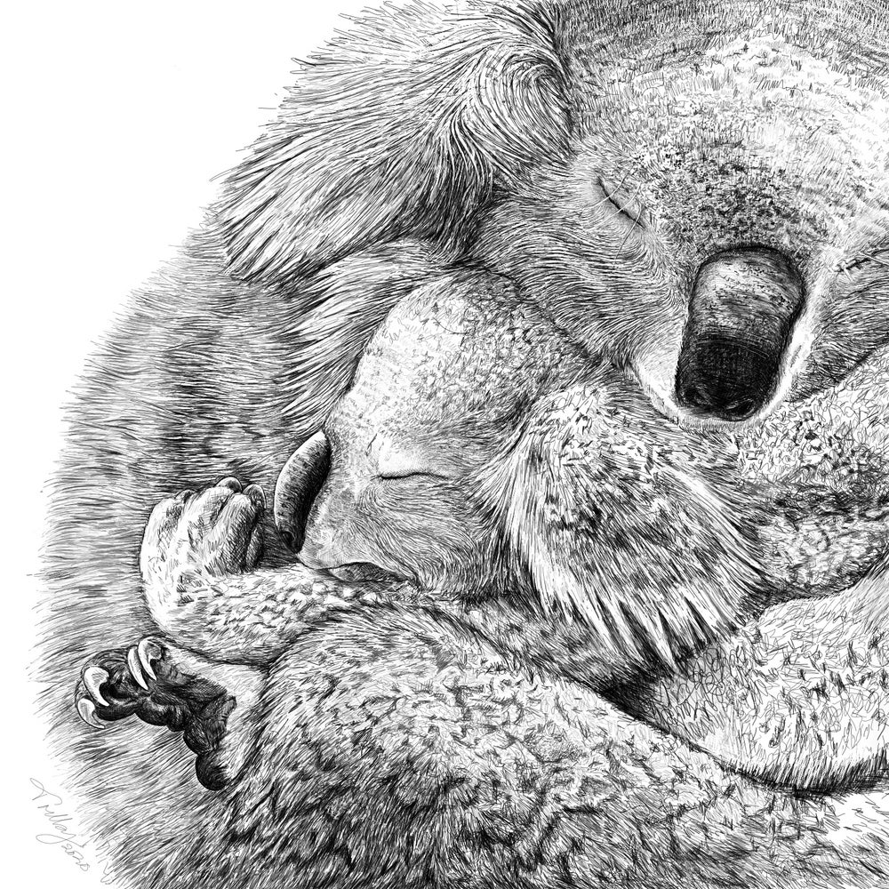 Image of Sleepy Koala - Mama Love