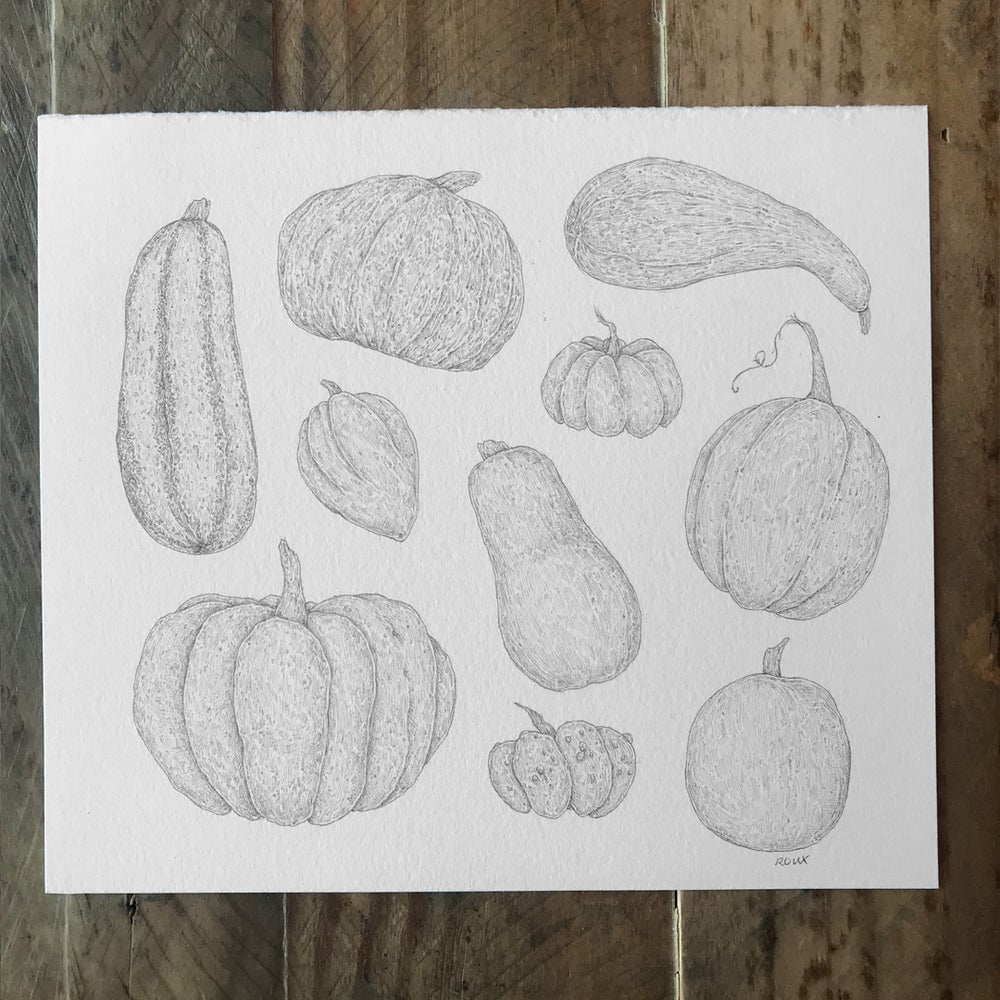 Image of Original Graphite Drawing: Gourds