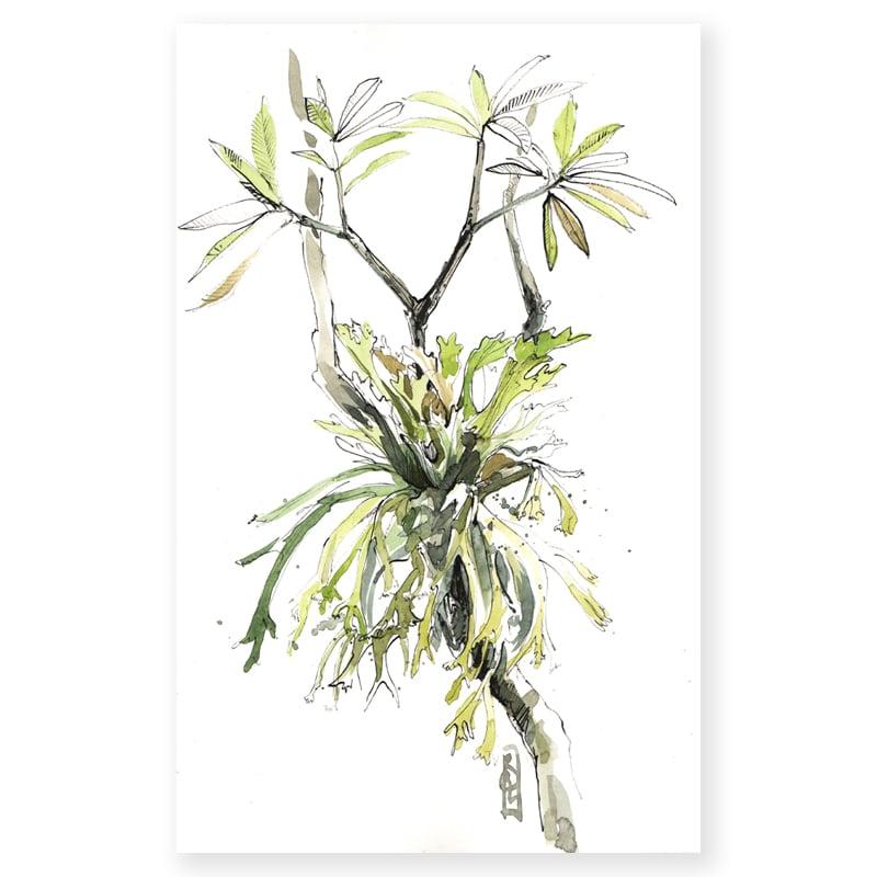 """Image of Original Painting - """"Fougères corne de cerf"""" - 29 x 42 cm"""