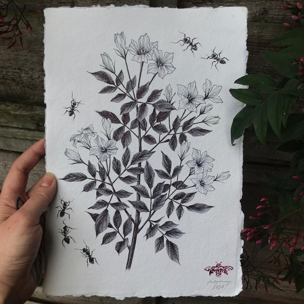 Image of jasmine and ants A4 original