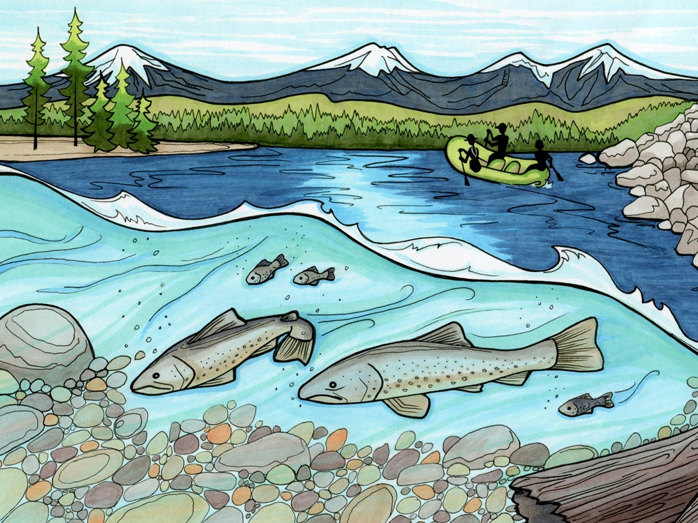 Image of Protect the Deschutes art print