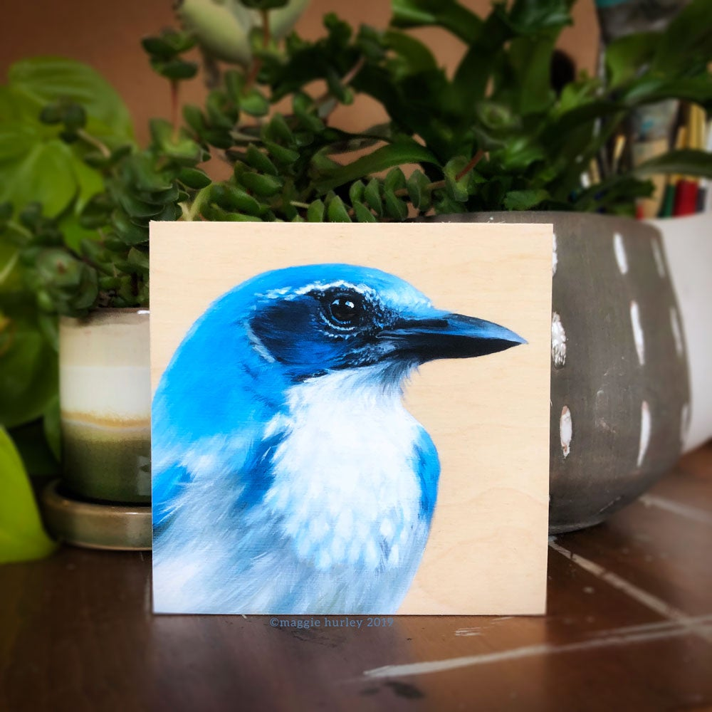 Image of California Scrub-jay Bird Print on Wood by Maggie Hurley